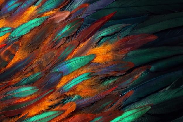 Photo en gros plan coloré de plumes de poulet.