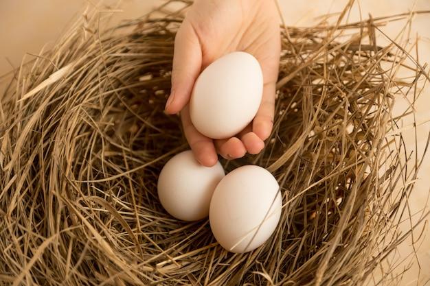 Photo gros plan de la cueillette à la main des œufs blancs du nid