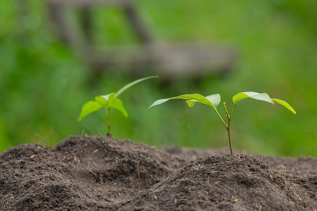 La photo en gros plan du jeune arbre de la plante se développe