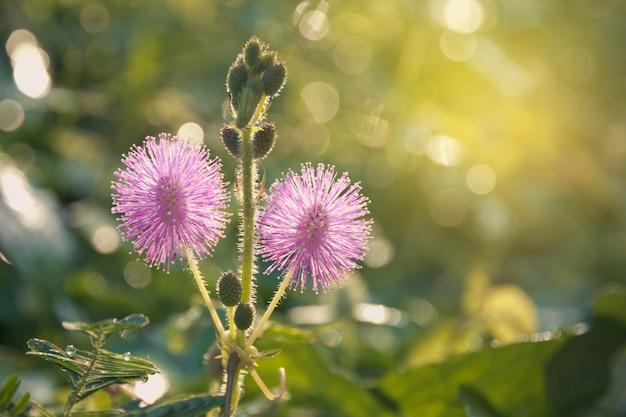 Photo gros plan d'une fleur sauvage de chardon dans le champ