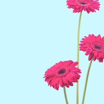 Photo gros plan de fleurs de gerber