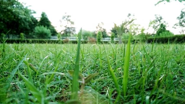 Photo de gros plan d'herbe dans le parc