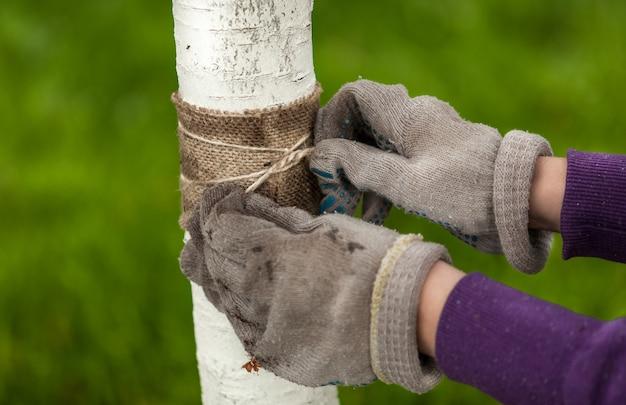 Photo gros plan de mains dans des gants attachant une bande de guérison autour d'un arbre