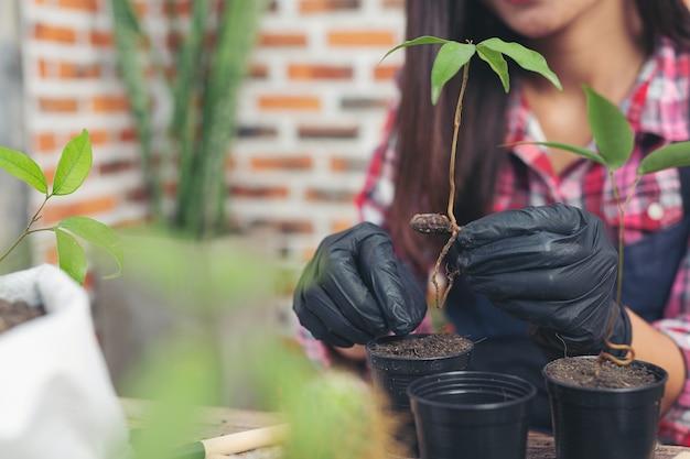 Photo gros plan des mains du jardinier planter des plantes