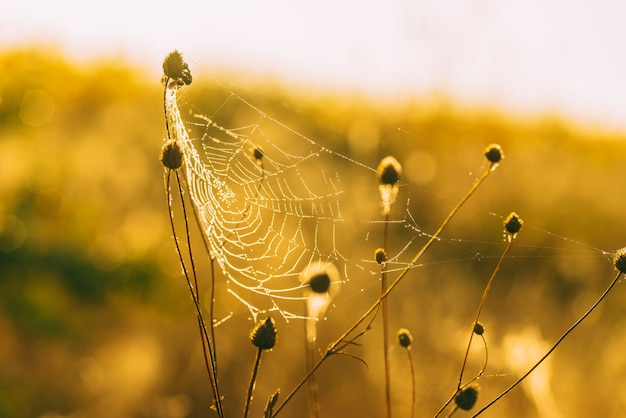 La photo en gros plan d'une toile d'araignée prise lors d'une journée ensoleillée.