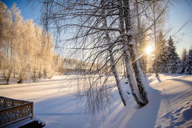 Photo d'hiver avec des arbres enneigés