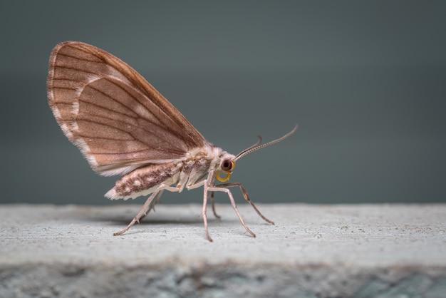 Photo latérale d'un papillon perché sur le mur