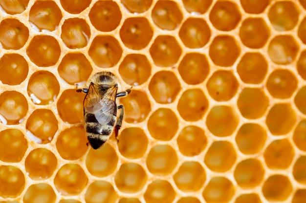 Photo macro d'abeilles qui travaillent sur l'apiculture en nid d'abeilles et l'image de la production de miel