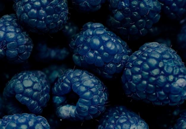 Photo macro de fond bleu framboise