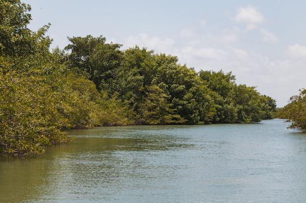 Photo de mangrove. mangrove. elevage de crabes