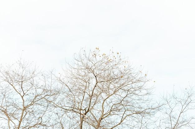 Une photo minimaliste d'un arbre sur un fond clair avec espace copie et ambiance relaxante