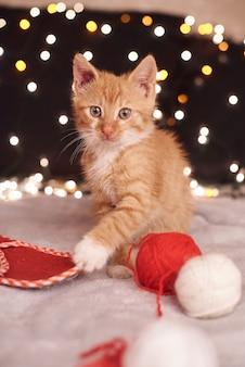 Photo de noël avec un mignon chat gingembre de lumières colorées sur le fond