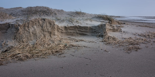 Photo panoramique d'algues sèches sur la rive sablonneuse de l'océan