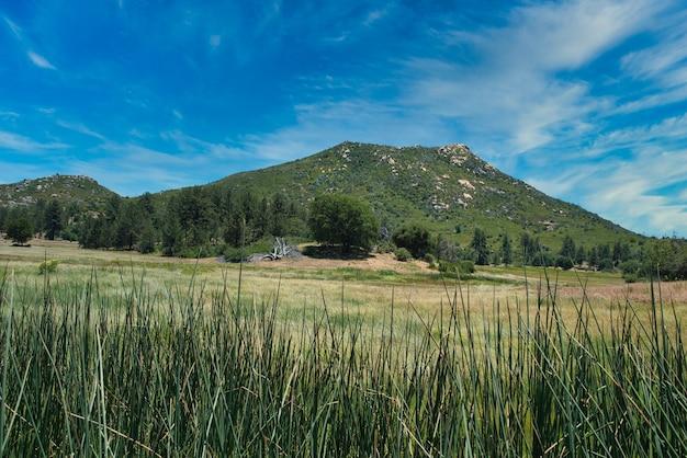 Photo panoramique d'un champ vert avec une montagne en arrière-plan