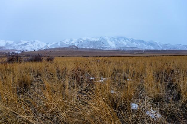 Photo panoramique d'une prairie avec des montagnes couvertes de neige en arrière-plan