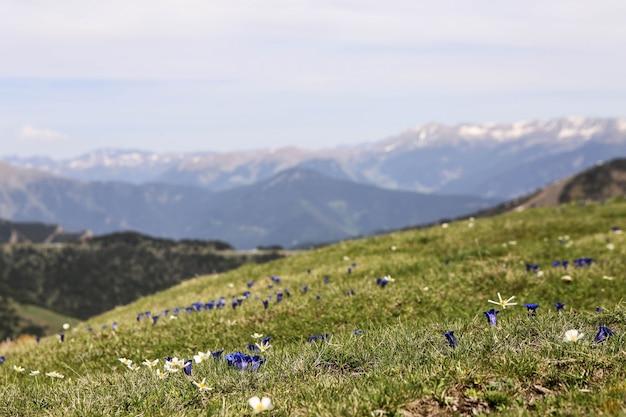 Photo de paysage de montagne des pyrénées enneigées dans la station de ski d'el tarter, andorre. fleurs de printemps