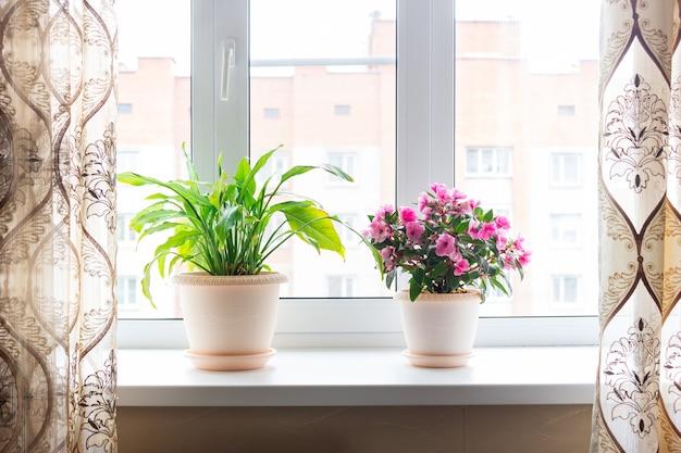 Photo recadrée de plantes d'intérieur wa dans des pots de fleurs présage des mains arrosant une plante d'intérieur rose dans des pots de fleurs