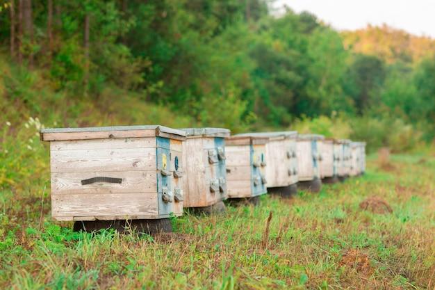 Photo de ruches colorées en bois dans la nature.