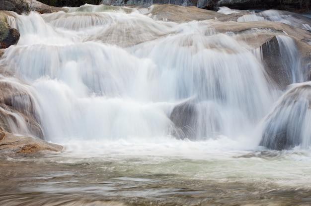 Une photo d'un torrent d'eau dans la forêt