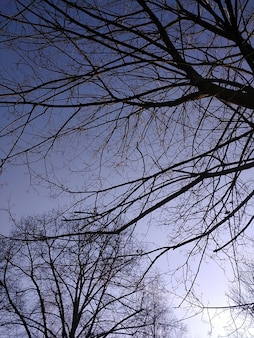Photo verticale de branches d'arbres sous la lumière du soleil et un ciel bleu