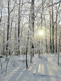 Photo verticale d'une forêt couverte d'arbres et de neige sous la lumière du soleil à larvik en norvège