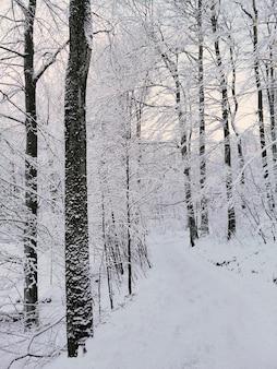 Photo verticale d'une forêt entourée d'arbres couverts de neige sous la lumière du soleil en norvège