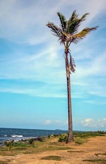 Photo verticale d'un palmier au milieu d'un sentier côtier à porto rico