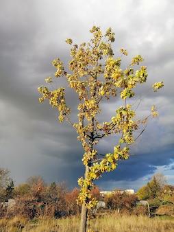 Photo verticale d'un tremble dans un pré entouré de verdure sous un temps nuageux