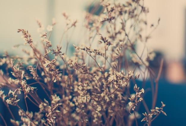 Photo vintage de fleurs sauvages au coucher du soleil