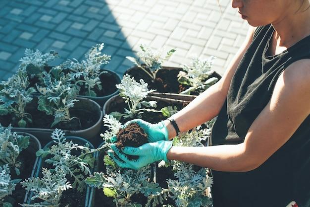 Photo vue de dessus d'une femme caucasienne occupée remplaçant une fleur d'un pot à un autre