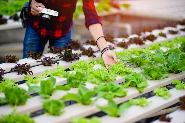 Un photographe masculin prend des photos dans son jardin de salade et aime la photographie. concept de photographie