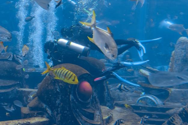 Photographes sous-marins en plongée sous-marine. plongeurs avec caméra entourés d'un grand nombre de poissons dans l'immense aquarium. atlantis, sanya, hainan, chine.