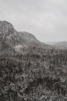 Photographie d'arbres en niveaux de gris