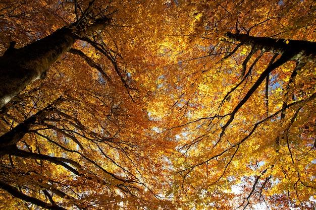 Photographie en contre-plongée d'arbres à feuilles brunes