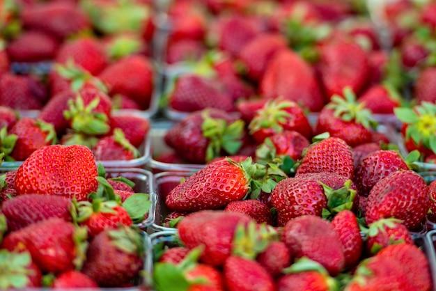 Photographie en gros plan de fraises fraîches.