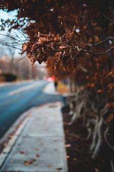 Photographie de mise au point peu profonde de feuilles brunes séchées