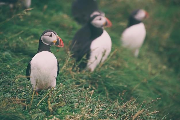 Photographie de mise au point sélective d'oiseau blanc