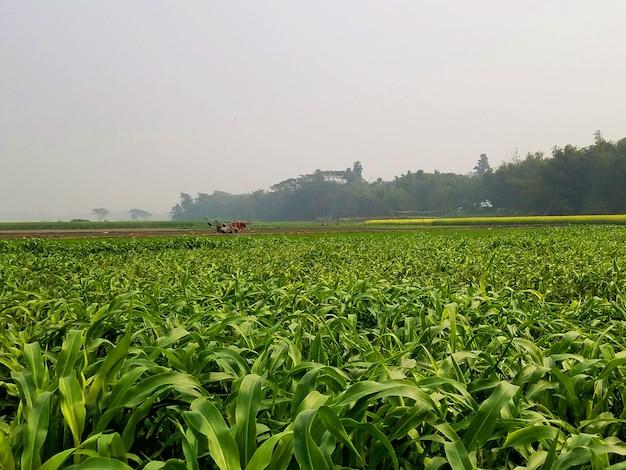 Photographie de nature de champ de cultures de campagne