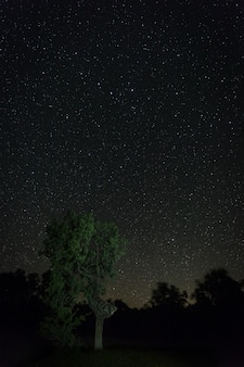 Photographie de nuit dans la zone naturelle d'aceituna. estrémadure. espagne.