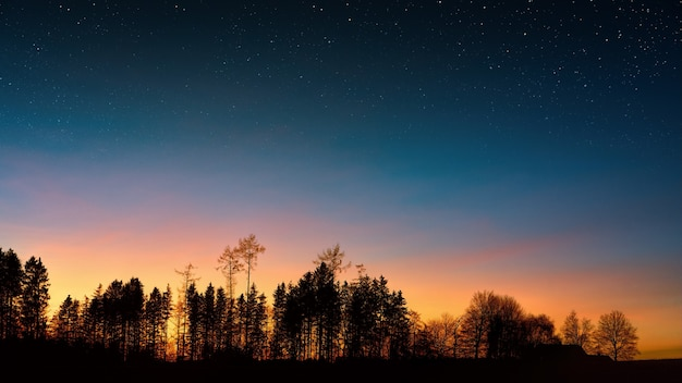 Photographie de silhouette d'arbres sous le ciel bleu pendant l'heure d'or