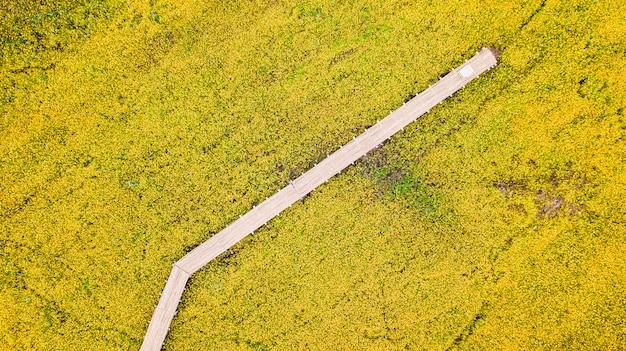 Photos aériennes de fleur de cosmos jaune avec passerelle