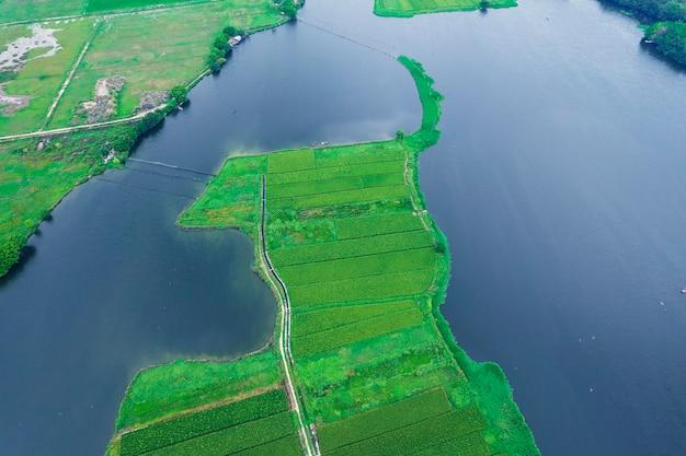 Photos aériennes de rizières
