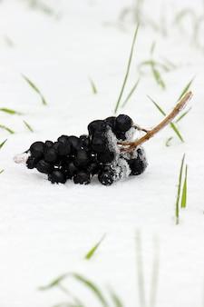 Photos nature d'hiver. saisons. mise au point sélective. la nature.