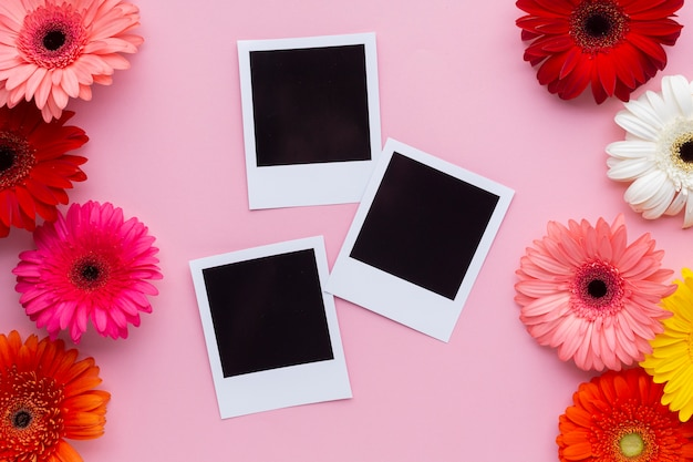 Photos polaroid avec des fleurs de gerbera