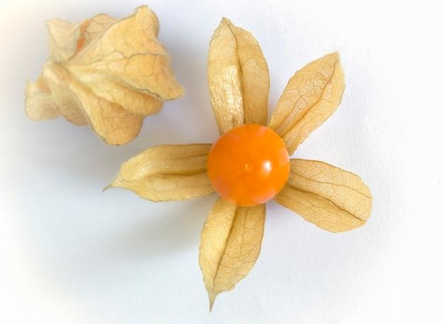 Physalis organique frais (groseille à cape) péruvienne sur blanc