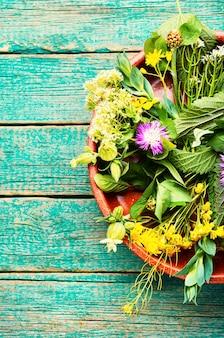 Phytothérapie, ensemble d'herbes et de plantes médicinales.médecine naturelle et homéopathie