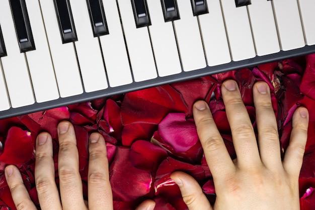 Pianiste les mains sur les pétales de fleur rose rouge. concept romantique avec touches de piano, vue de dessus.
