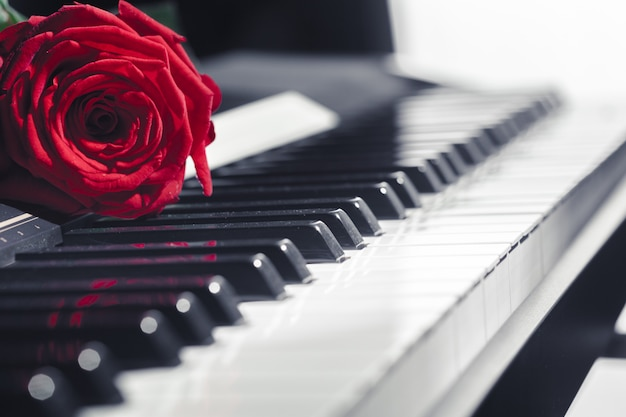 Piano à queue avec rose rouge
