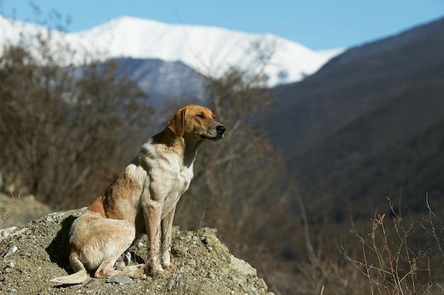 Piebald chien brun profitant du soleil d'hiver dans les montagnes