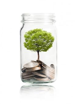 Pièces de monnaie et arbre poussant dans un bocal